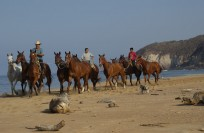 Horseback riding at Teopa Beach, a 7-km uninhabited stretch of beach with amazing wildlife and a turtle breeding station